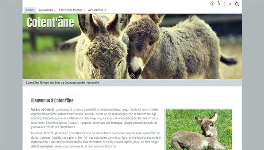 animaux-equins/elevage-cotentane.jpg